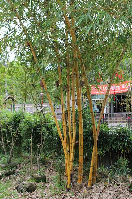 南投美食小吃旅遊景點