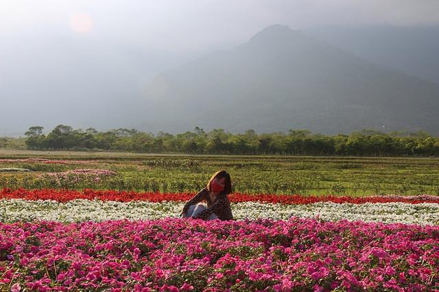 【花蓮旅遊景點推薦】大農大富平地森林,花蓮熱氣球