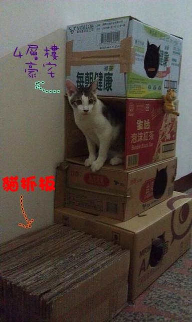 自己做貓咪的窩  紙箱