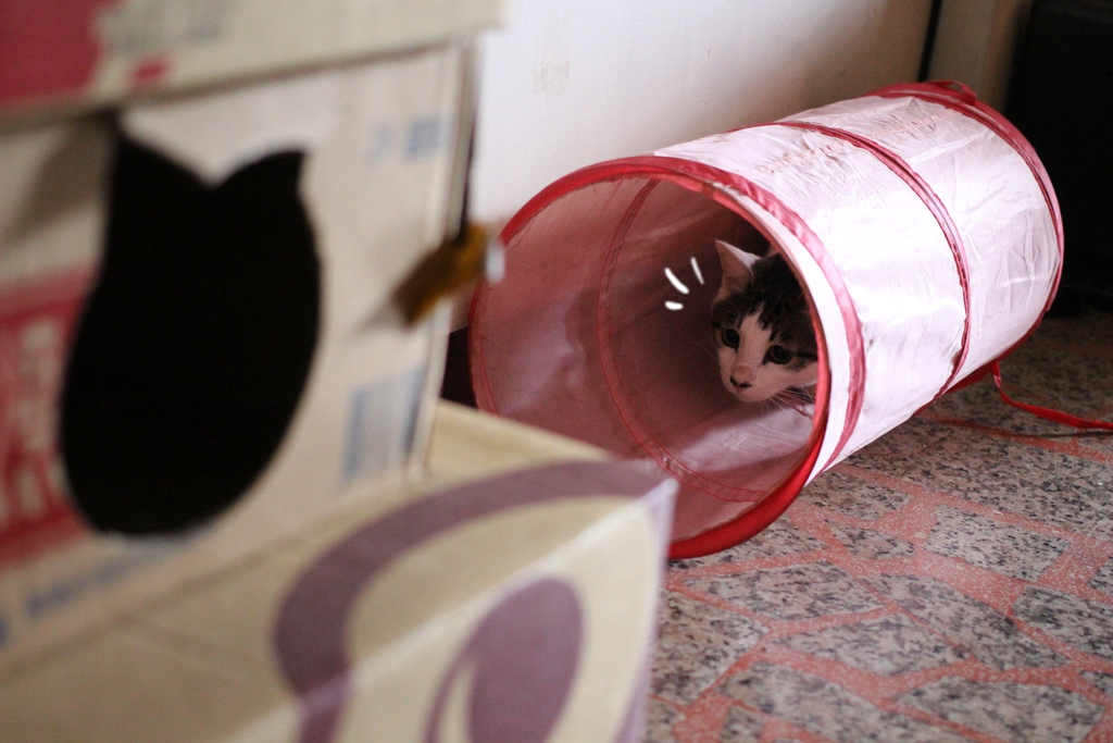 貓咪的窩  自己做貓咪的窩  紙箱