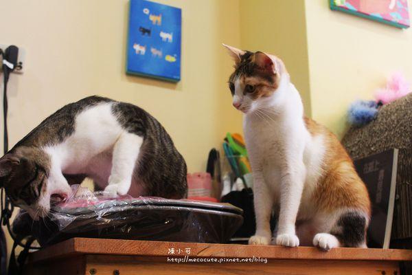 這裡有貓 輕食屋cafe