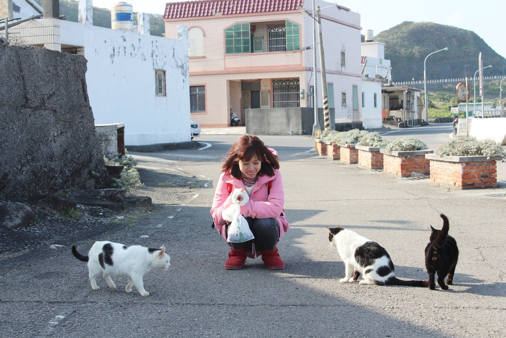 宜蘭馬崗 貓村 貓鄉 拍貓咪 台北到馬岡一日遊