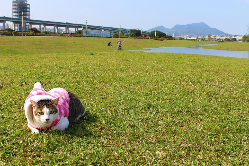 幸福水漾公園 新北市三重旅遊景點 大台北都會公園