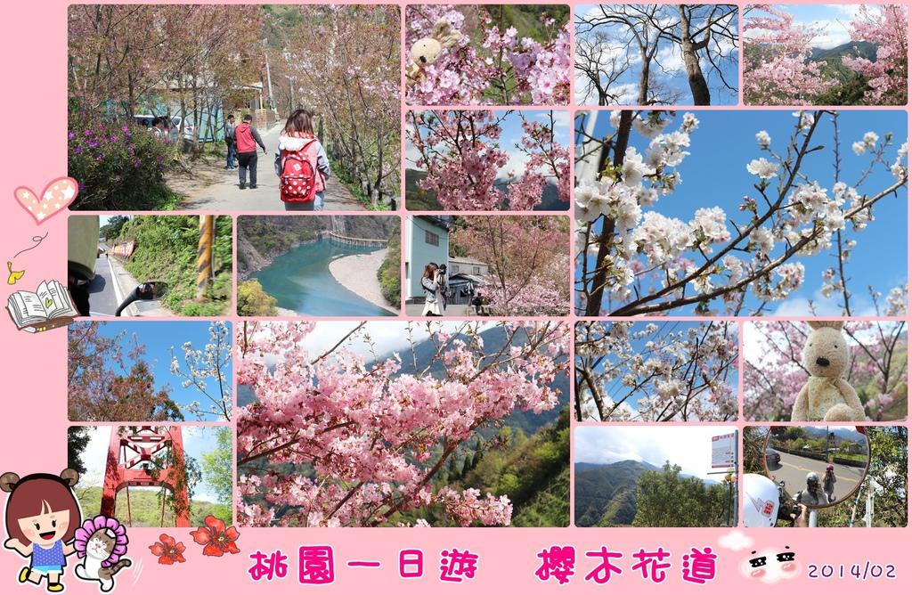 櫻木花道 桃園一日遊景點 來去櫻木花道看櫻花 桃園復興鄉中巴陵櫻木花道