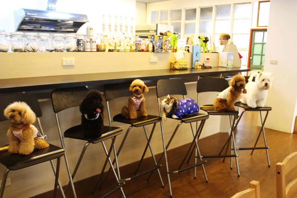 新北市板橋寵物餐廳 可帶寵物的餐廳