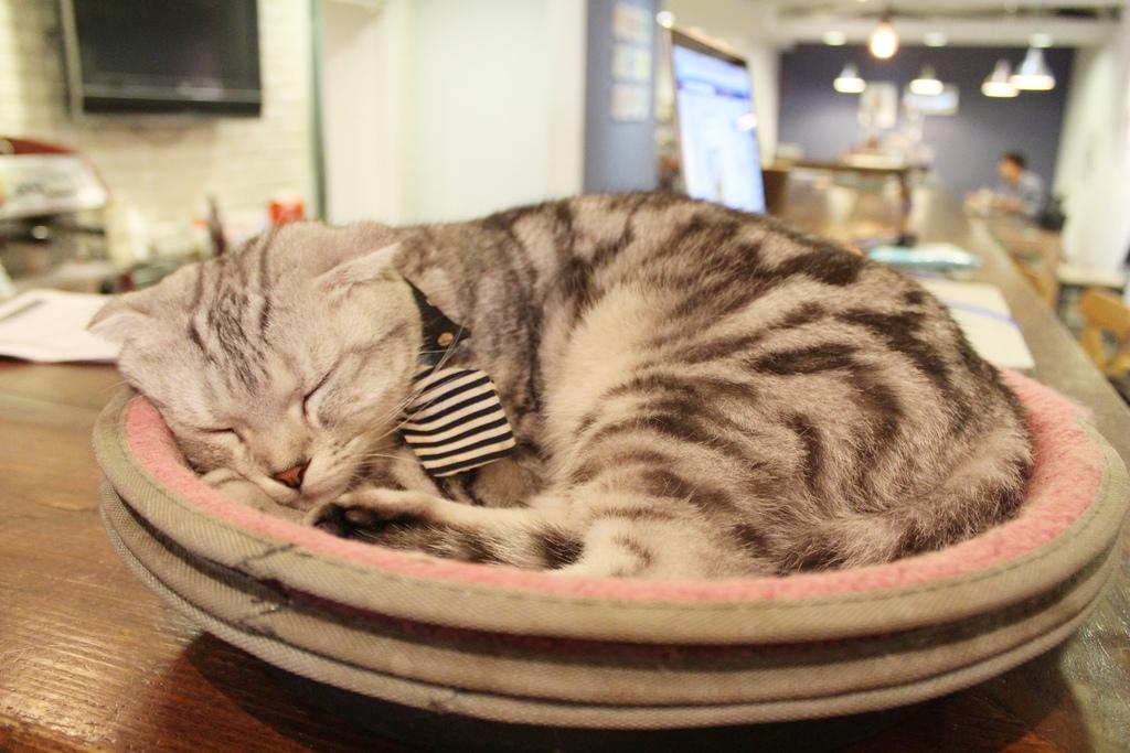 小春日和 動物雜貨.珈啡 台北咖啡館 民生社區咖啡館 可以帶寵物 店內有貓咪