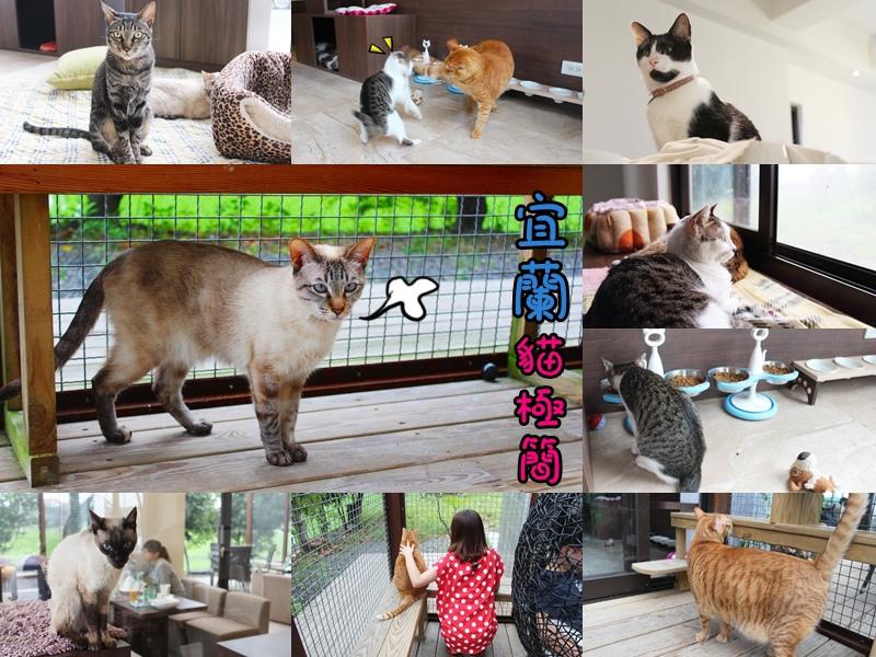 宜蘭五結貓極簡  【宜蘭咖啡館、下午茶】貓極簡~貓奴來看貓咪了(宜蘭五結店)