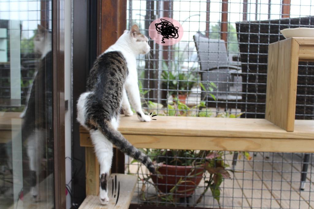 宜蘭貓極簡咖啡廳(館) 宜蘭貓極簡菜單價位 貓咪咖啡館 店內有貓 宜蘭五結貓極簡咖啡 貓咪寵物咖啡店 宜蘭貓極簡地址 宜蘭貓極簡營業時間 宜蘭五結貓極簡
