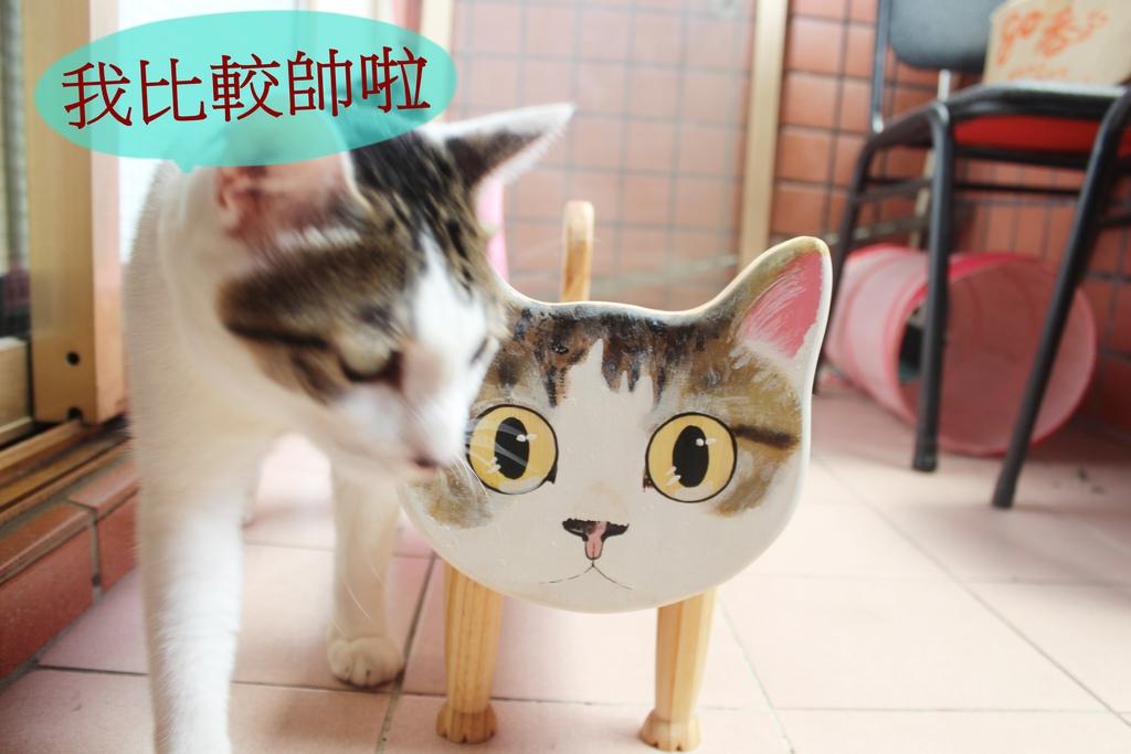 寵物家具,寵物貓咪狗狗餐桌,生活記事,訂製貓咪餐桌,貓咪,阿貴 @陳小可的吃喝玩樂